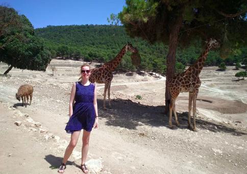 Alicante giraffes