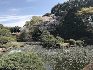 新宿御苑 Live Englishオンライン英会話のお花見